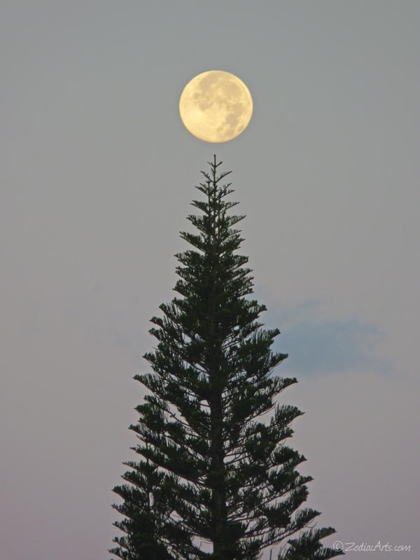 20140613-0551-P1120449-Moon5-Tree