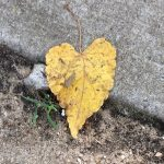 Love note leaf