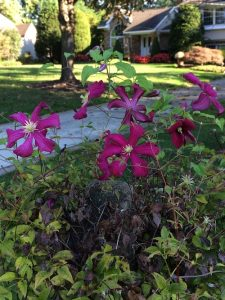 New Flowers in the Fall October 2017